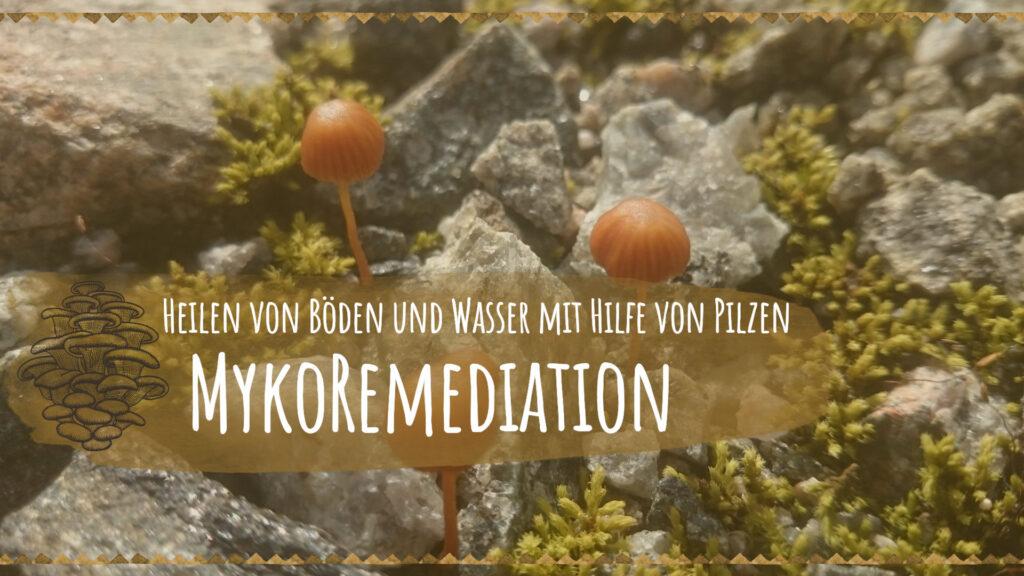 Mykoremediation