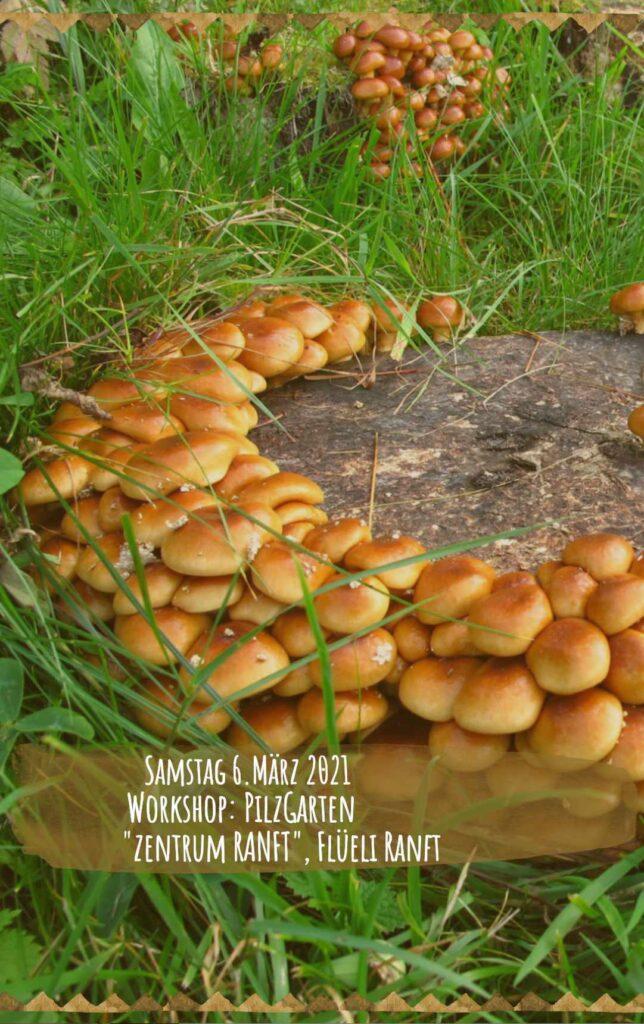 WS_Pilzgarten_03_06_mobile
