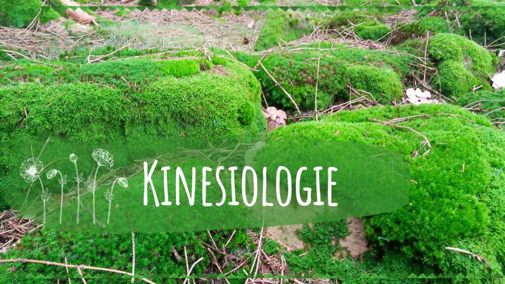 kinesiologie