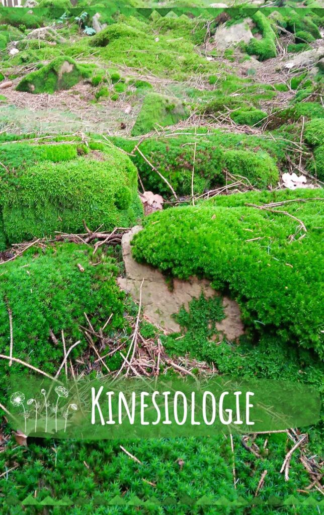kinesiologie_mobile