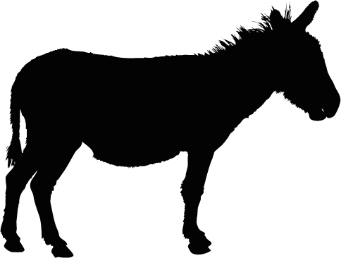 Kinesiologie am Tier